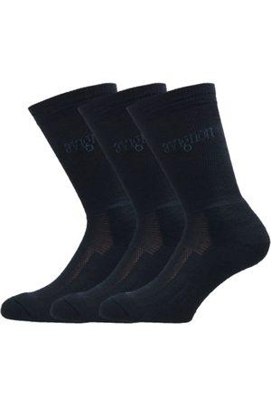 AVIGNON Terry Wool 3-pack